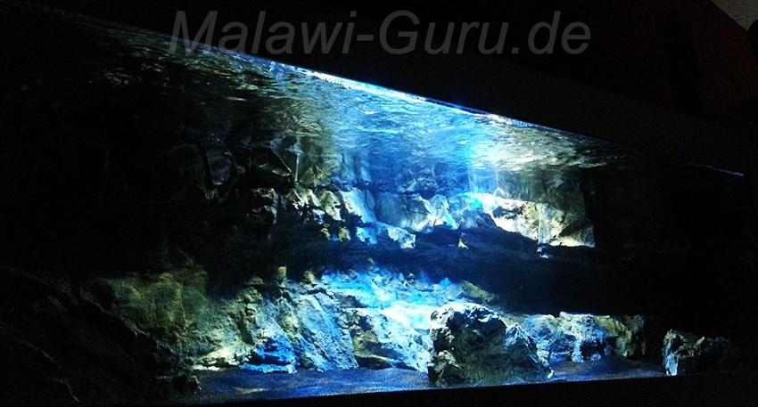 Lake Malawi Tank Impressions from Mischa Wilken
