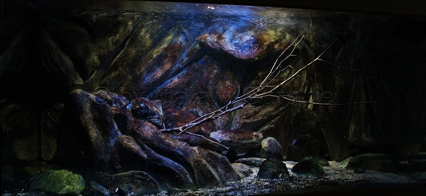 malawi farbfolien und die beleuchtung im aquarium. Black Bedroom Furniture Sets. Home Design Ideas