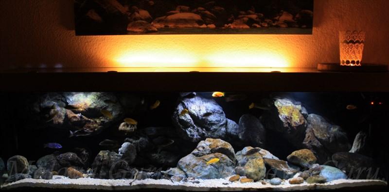 deko fur aquarium selber machen, malawi-guru.de - holz - imprägnieren mittels salzbad, Design ideen