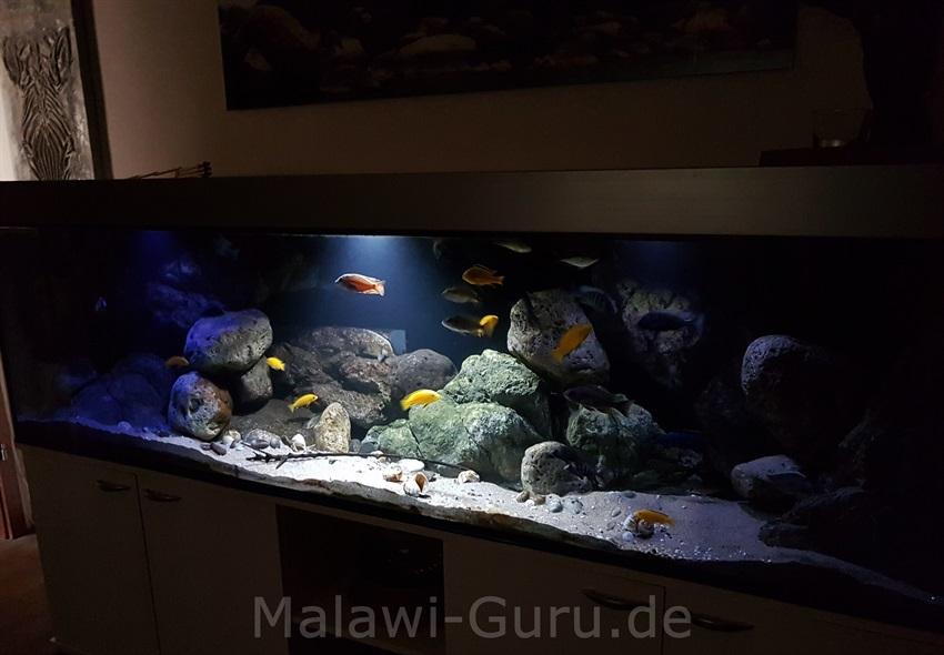 malawi bodengrund vom malawisee. Black Bedroom Furniture Sets. Home Design Ideas