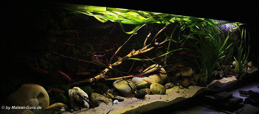 malawi led beleuchtung in der aquaristik die zukunft. Black Bedroom Furniture Sets. Home Design Ideas