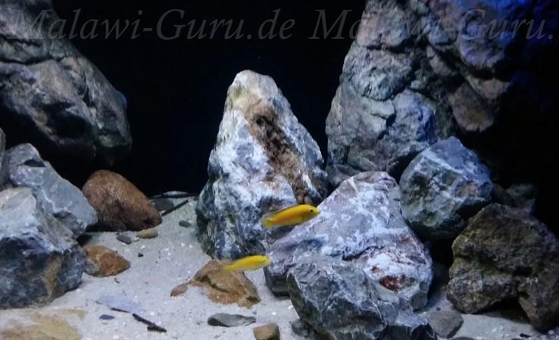 malawi mbuna aquarium module echte steine. Black Bedroom Furniture Sets. Home Design Ideas