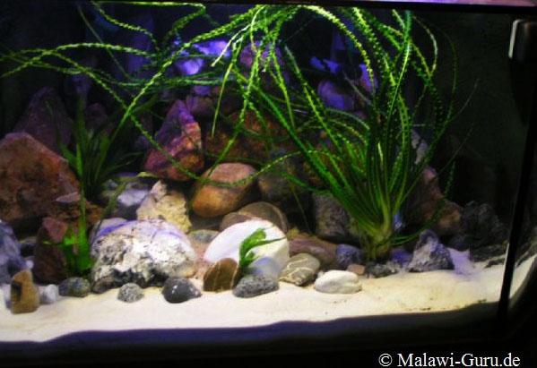 malawi aquarien. Black Bedroom Furniture Sets. Home Design Ideas