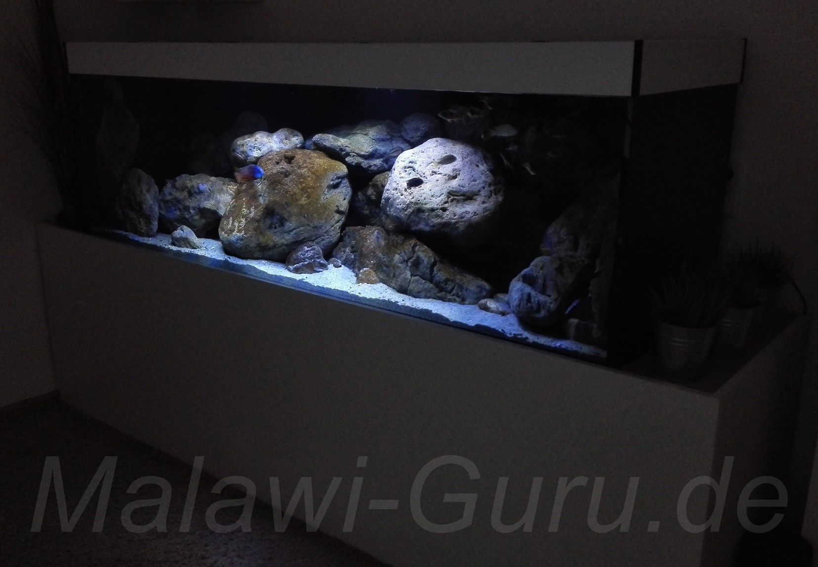 malawi aquarien malawi aquarium in dekorationen f r. Black Bedroom Furniture Sets. Home Design Ideas
